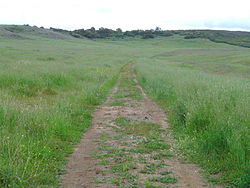 picture-of-bunchgrass-near-Santa-rosa-plateau-neighborhood-zip-code-92562